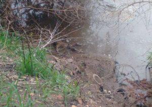 homem-e-encontrado-morto-as-margens-do-rio-poti-345751